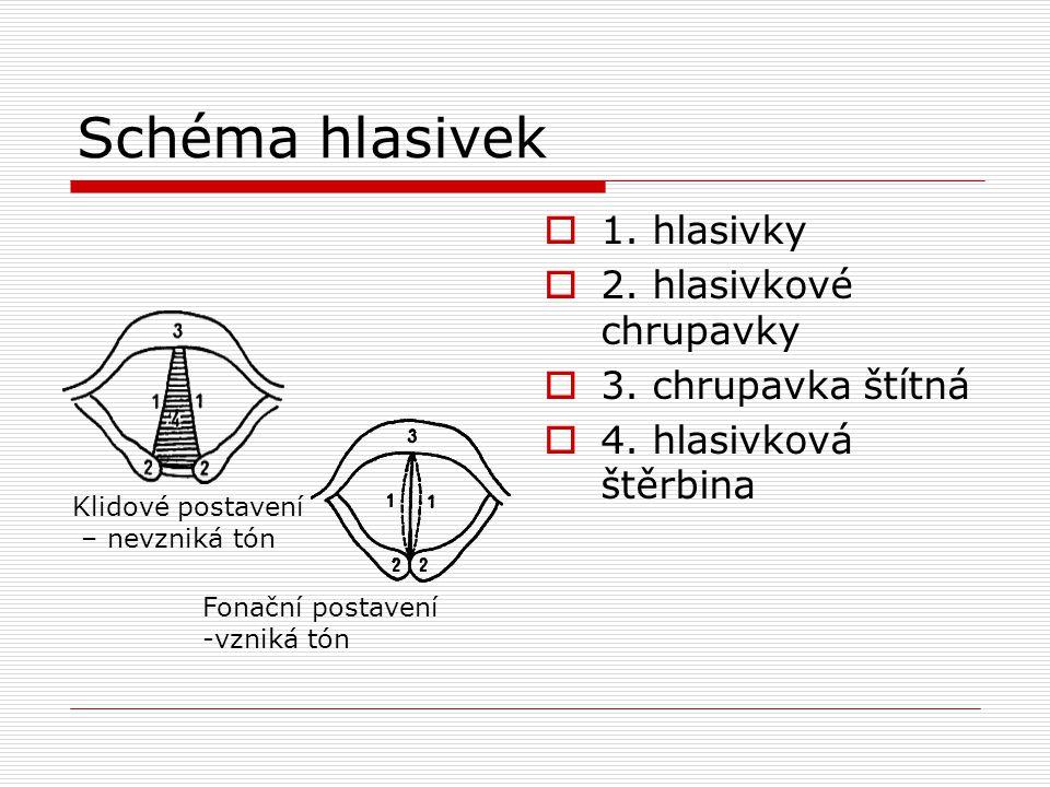 Schéma hlasivek 1. hlasivky 2. hlasivkové chrupavky