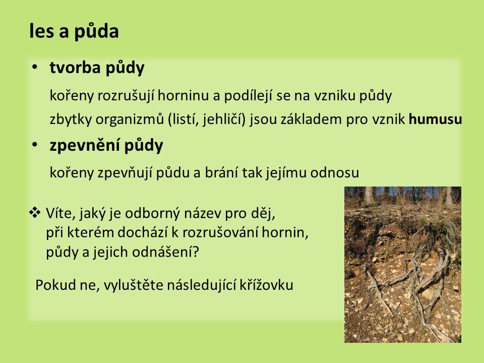 les a půda tvorba půdy. kořeny rozrušují horninu a podílejí se na vzniku půdy. zbytky organizmů (listí, jehličí) jsou základem pro vznik humusu.