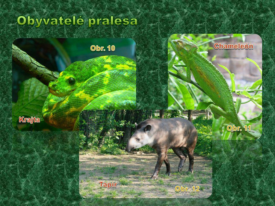 Obyvatelé pralesa Chameleón Obr. 10 Krajta Obr. 11 Tapír Obr. 12