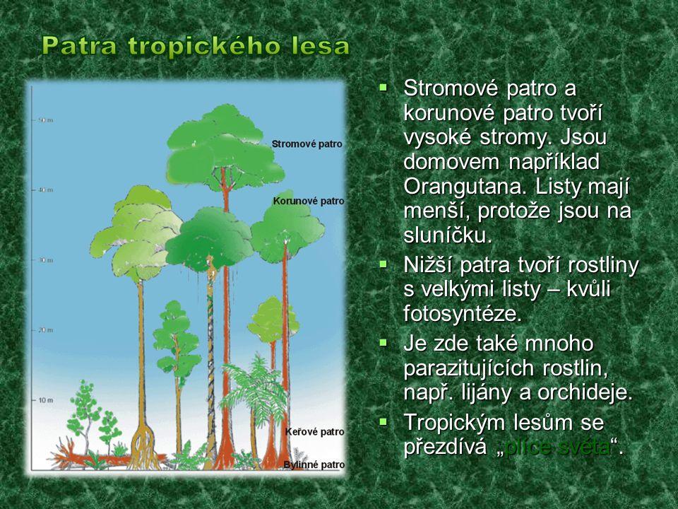 Patra tropického lesa