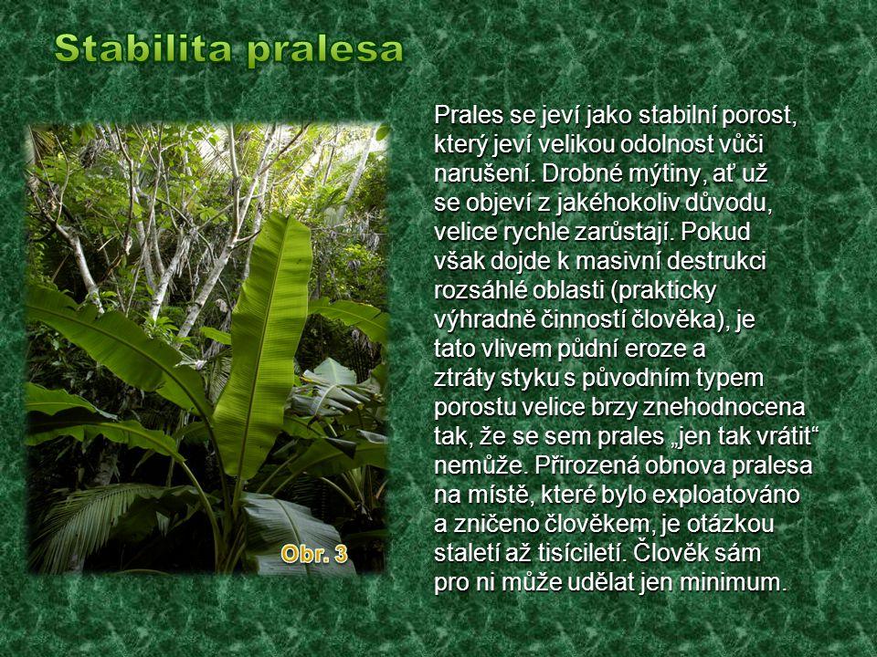 Stabilita pralesa Prales se jeví jako stabilní porost,