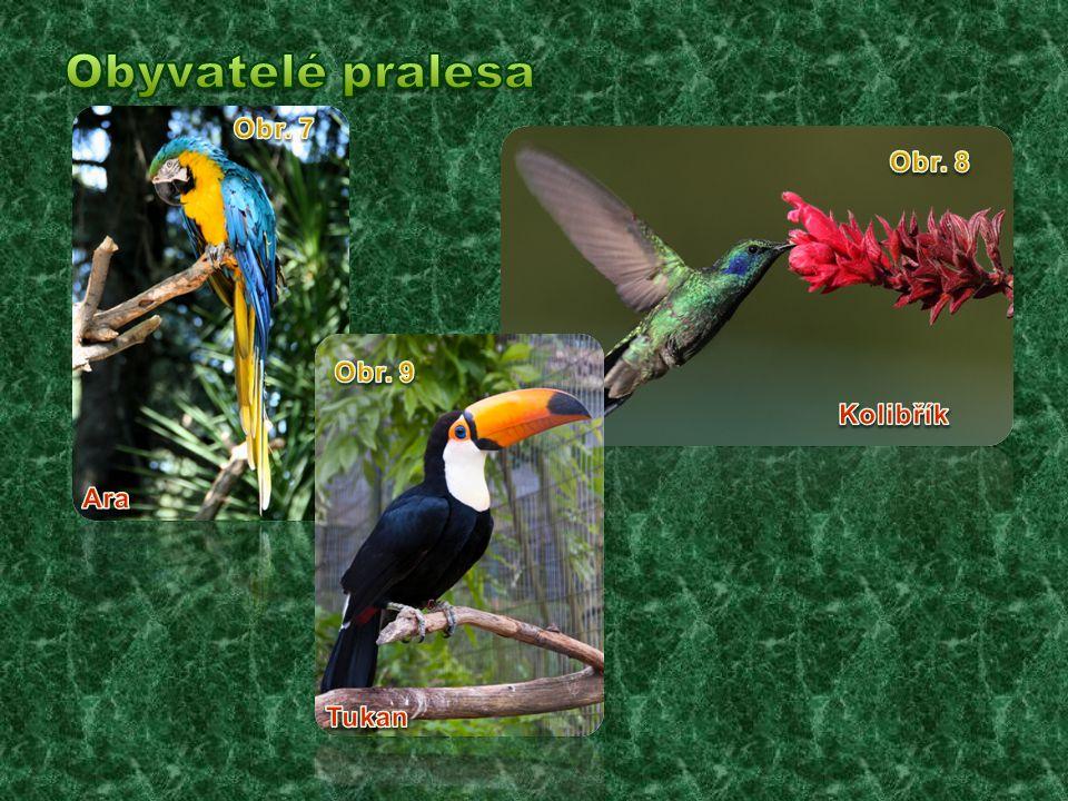 Obyvatelé pralesa Obr. 7 Obr. 8 Obr. 9 Kolibřík Ara Tukan