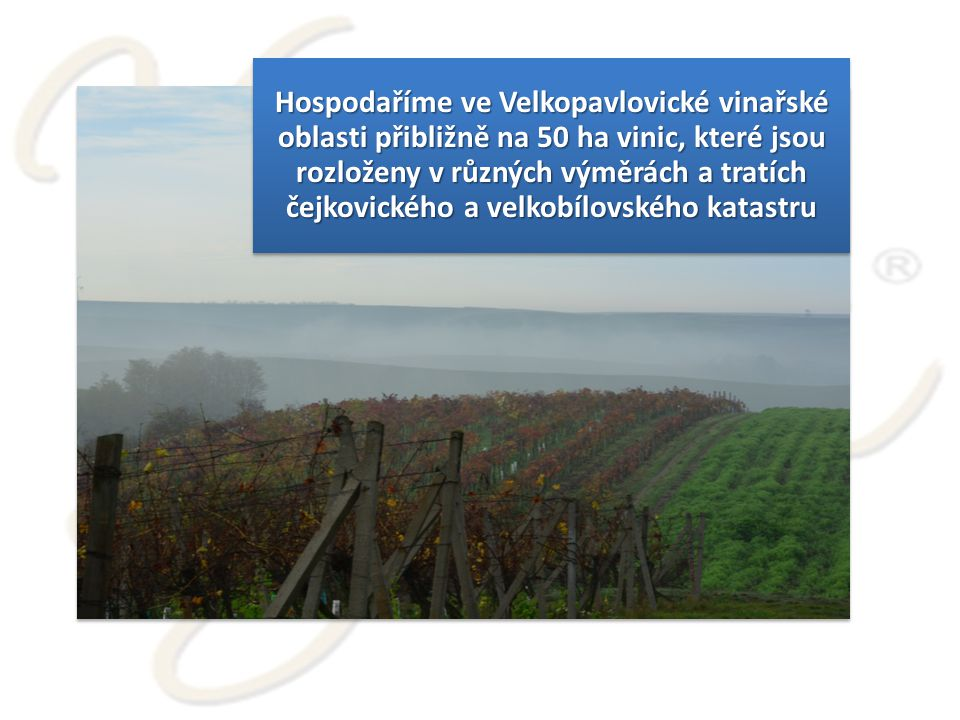 Hospodaříme ve Velkopavlovické vinařské oblasti přibližně na 50 ha vinic, které jsou rozloženy v různých výměrách a tratích čejkovického a velkobílovského katastru