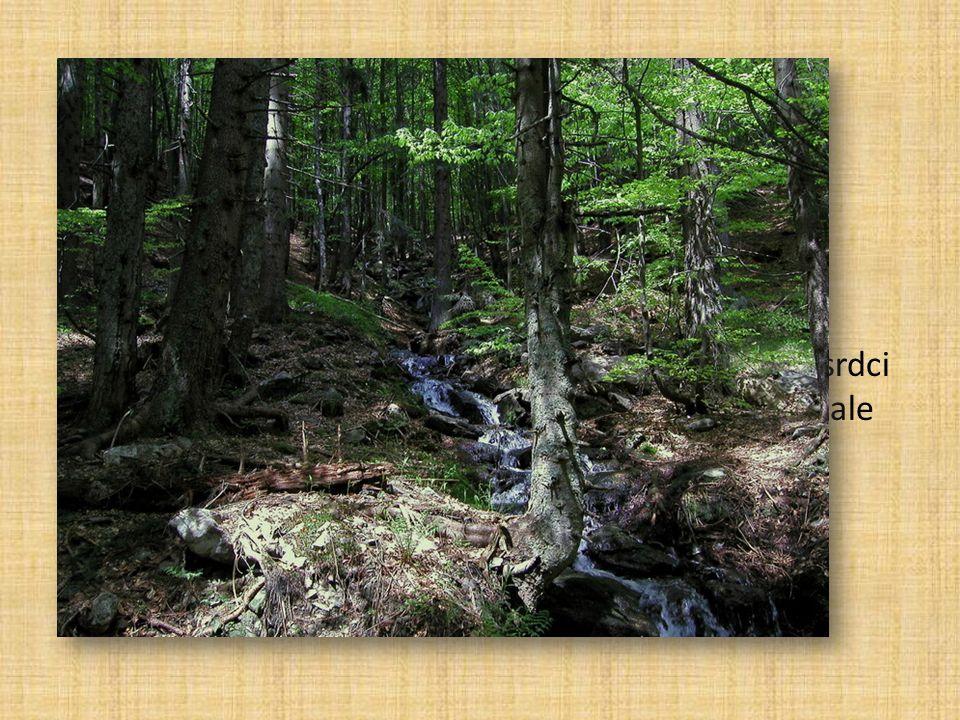Lesy Boubínský prales Více než třetinu JK zabírají lesy
