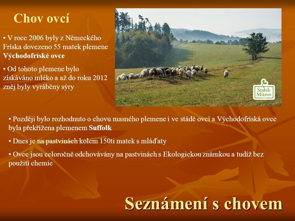 Seznámení s chovem Chov ovcí