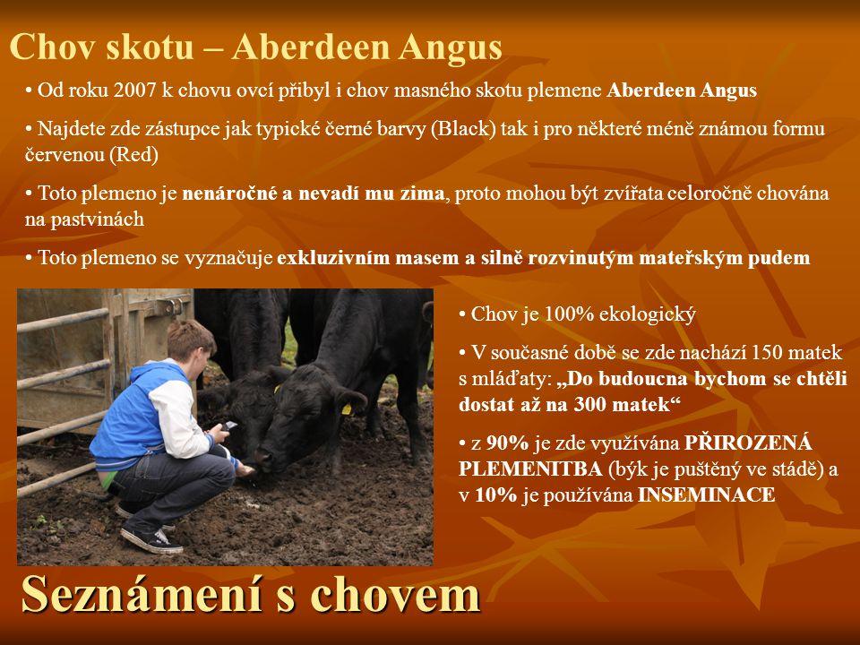 Seznámení s chovem Chov skotu – Aberdeen Angus