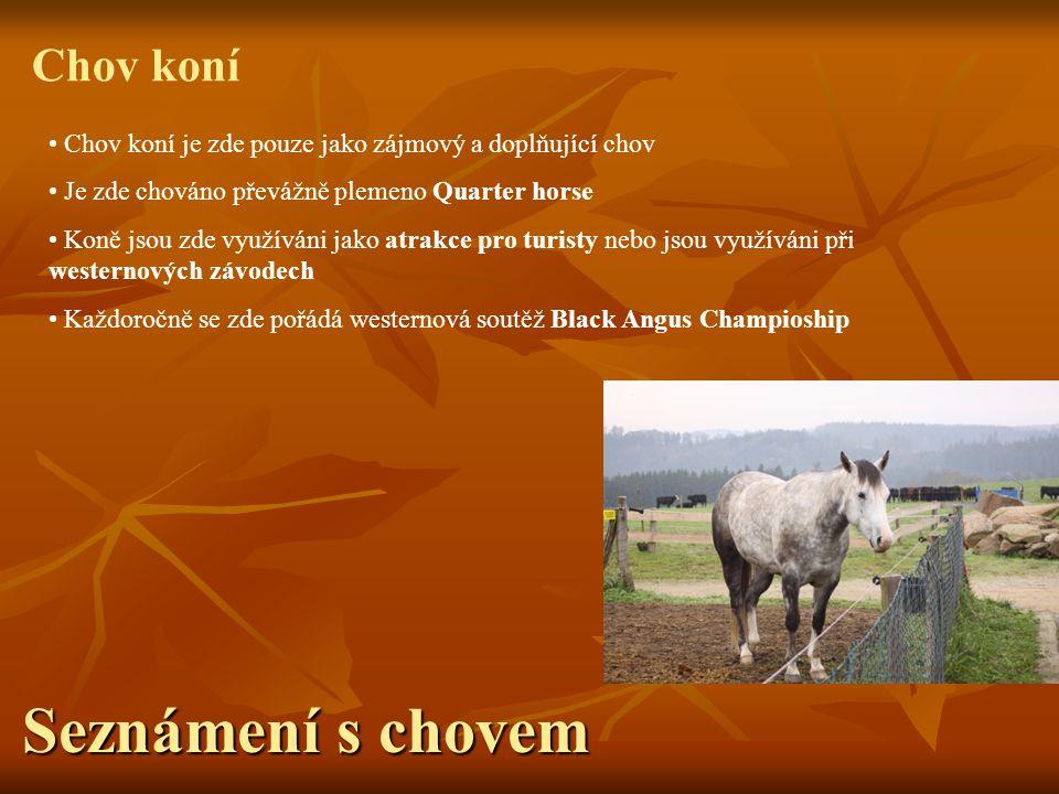 Seznámení s chovem Chov koní