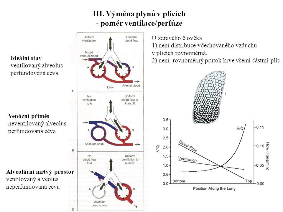 III. Výměna plynů v plicích - poměr ventilace/perfúze