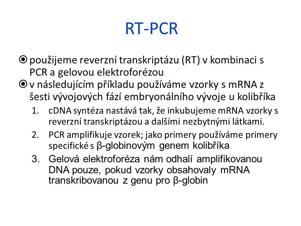 RT-PCR použijeme reverzní transkriptázu (RT) v kombinaci s PCR a gelovou elektroforézou.