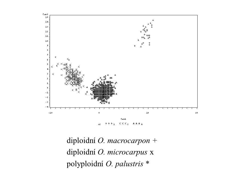 diploidní O. macrocarpon +