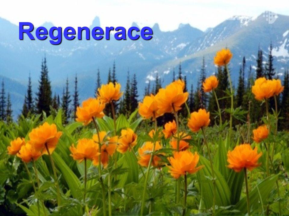 Regenerace Hygiena, první pomoc a regenerace