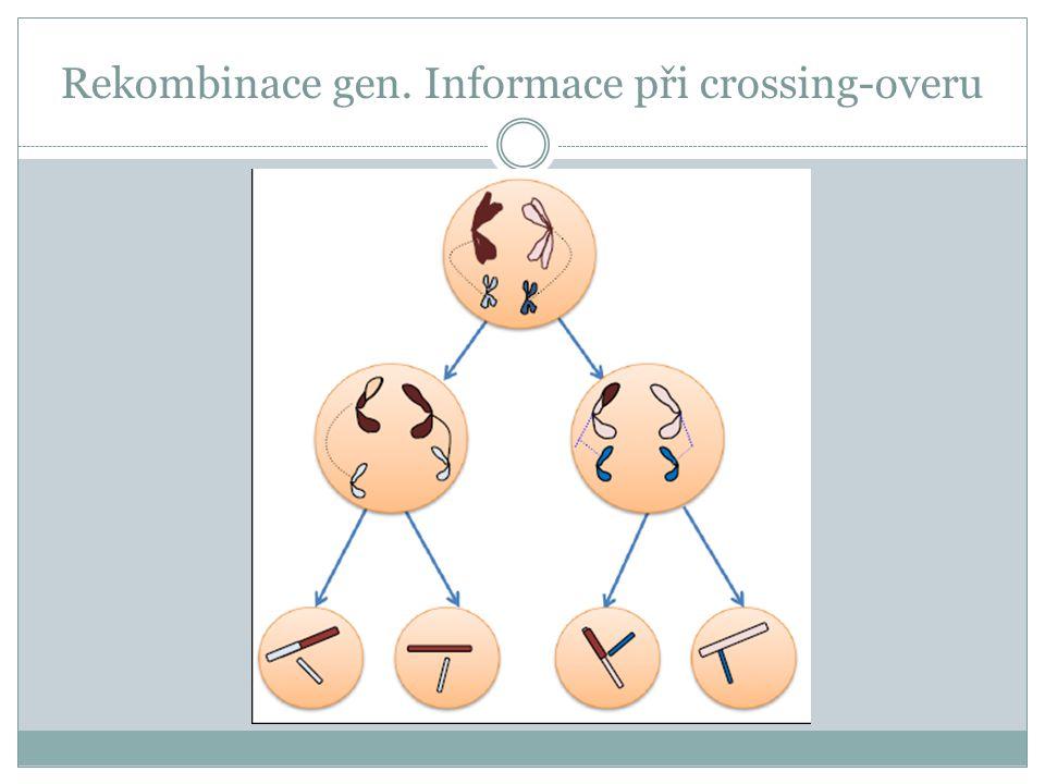 Rekombinace gen. Informace při crossing-overu