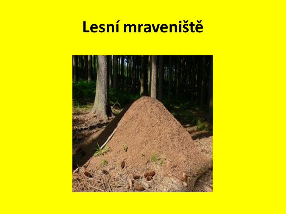 Lesní mraveniště