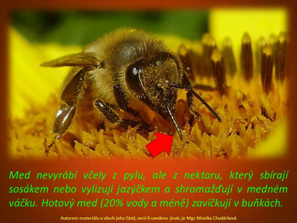 Med nevyrábí včely z pylu, ale z nektaru, který sbírají sosákem nebo vylizují jazýčkem a shromažďují v medném váčku. Hotový med (20% vody a méně) zavíčkují v buňkách.