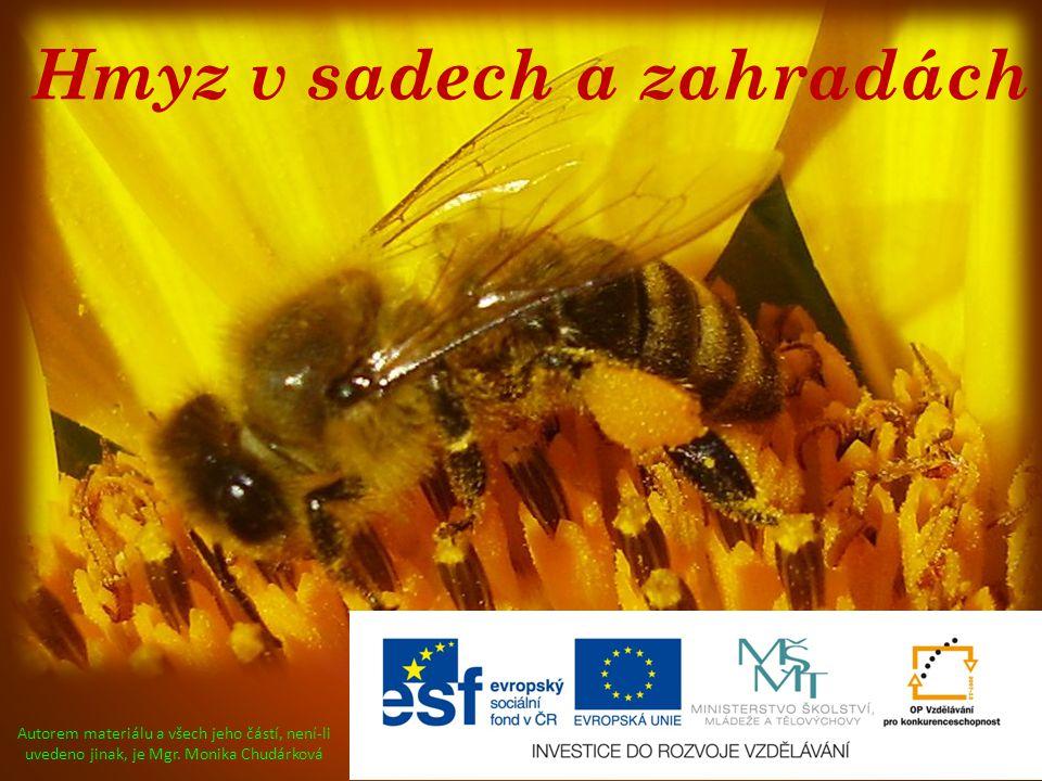 Hmyz v sadech a zahradách