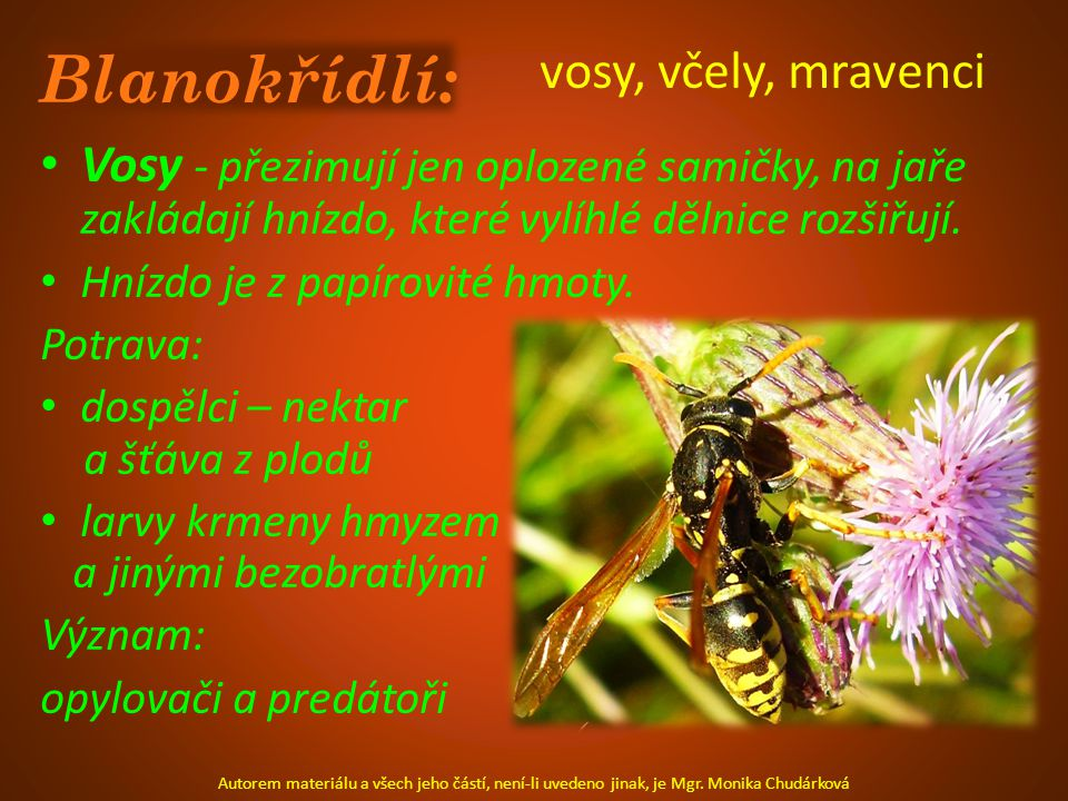 Blanokřídlí: vosy, včely, mravenci