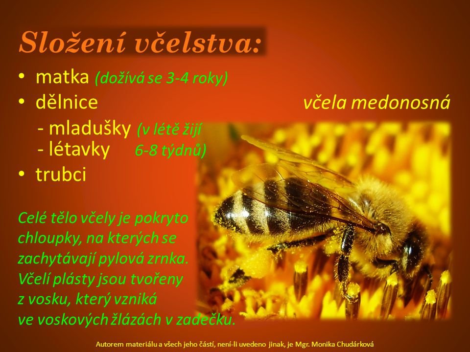 Složení včelstva: matka (dožívá se 3-4 roky) dělnice