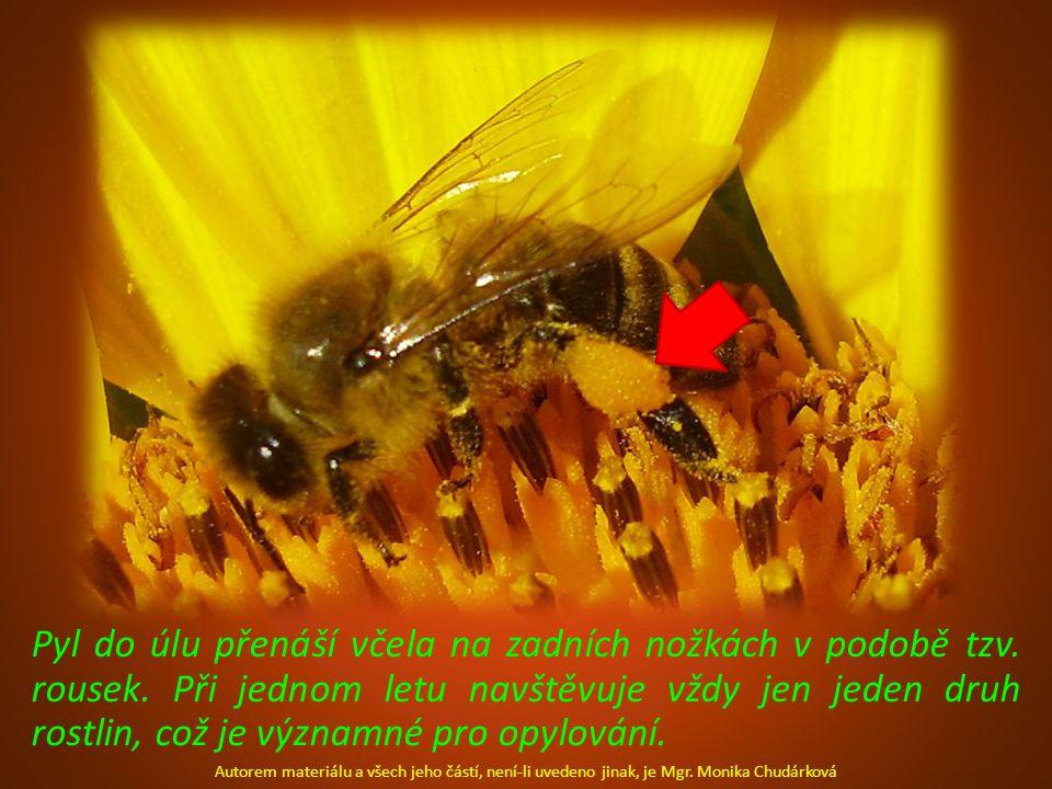 Pyl do úlu přenáší včela na zadních nožkách v podobě tzv. rousek