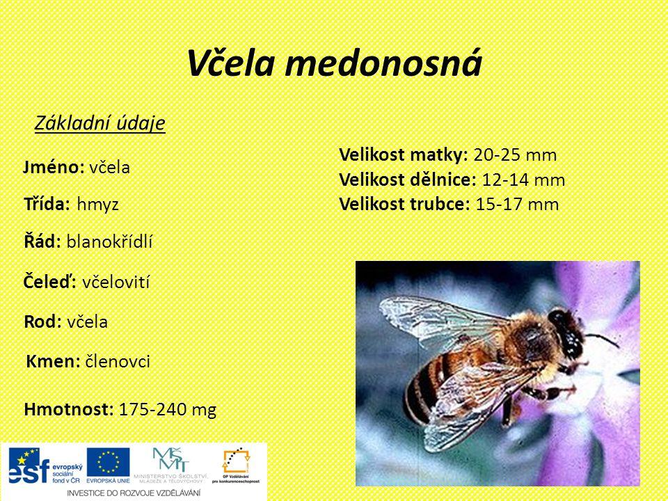 Včela medonosná Základní údaje Velikost matky: 20-25 mm Jméno: včela