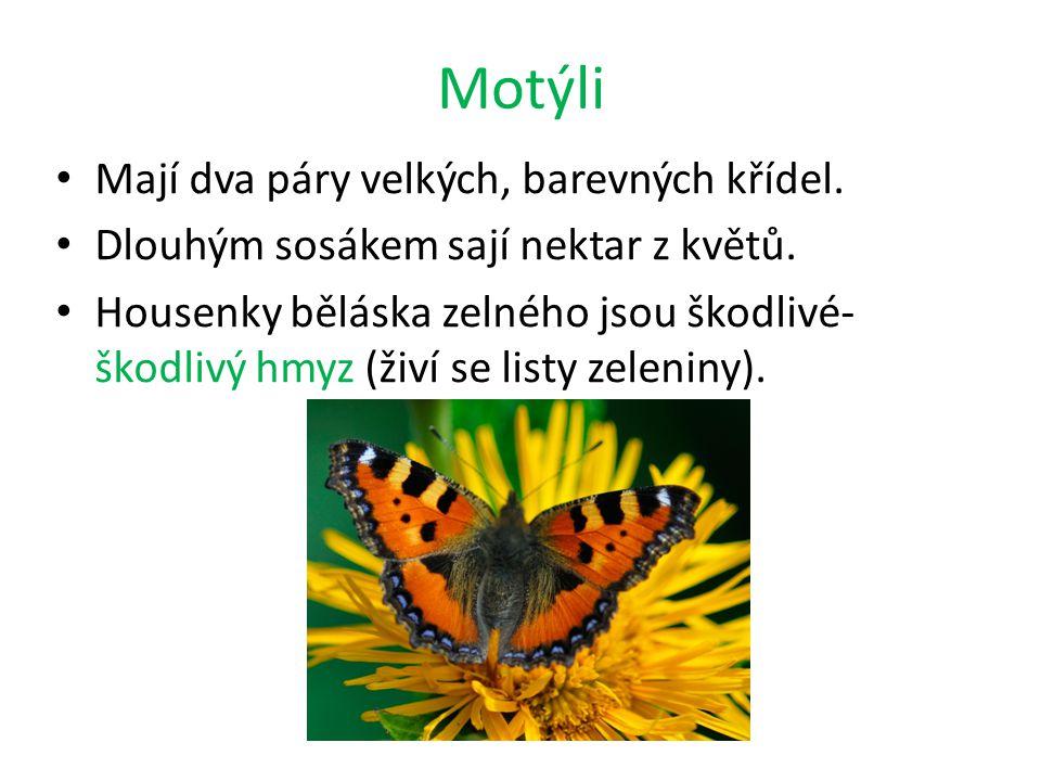 Motýli Mají dva páry velkých, barevných křídel.