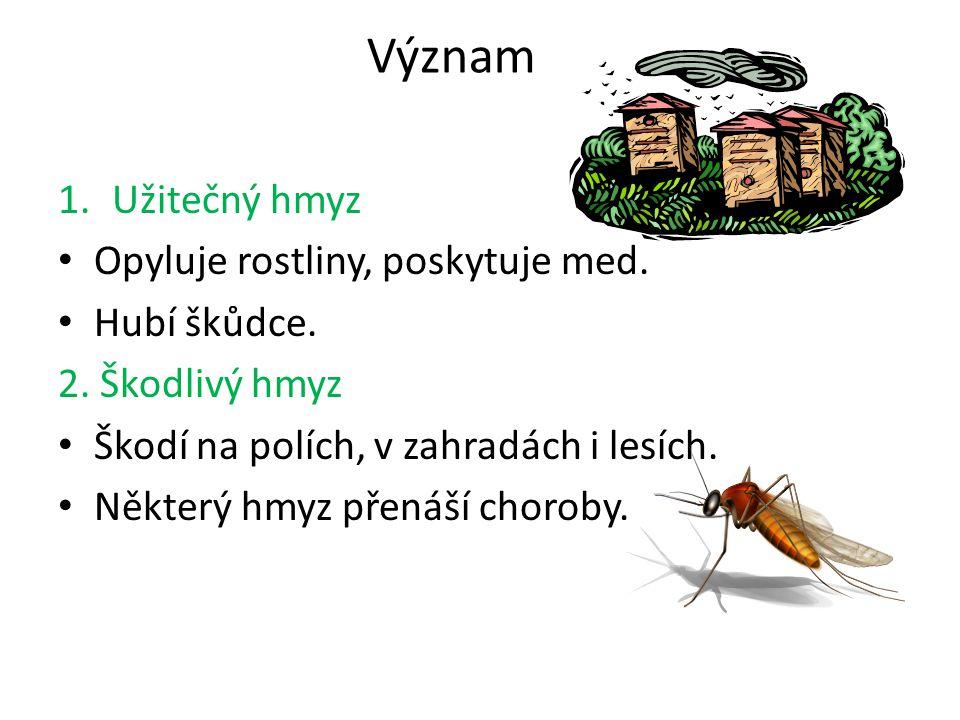 Význam Užitečný hmyz Opyluje rostliny, poskytuje med. Hubí škůdce.