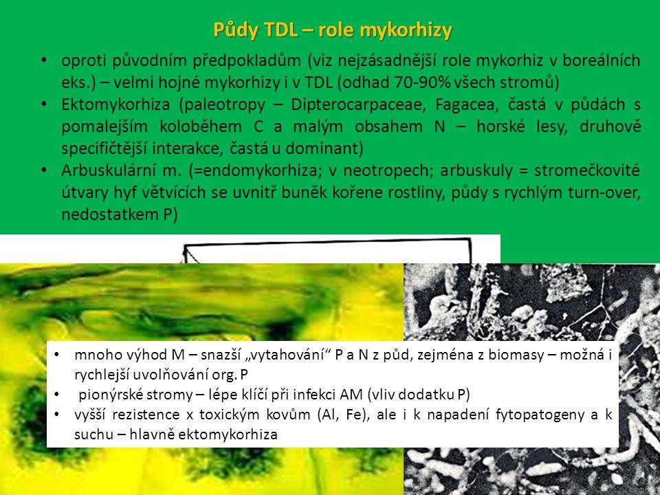 Půdy TDL – role mykorhizy
