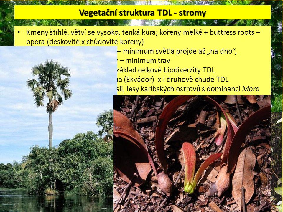 Vegetační struktura TDL - stromy