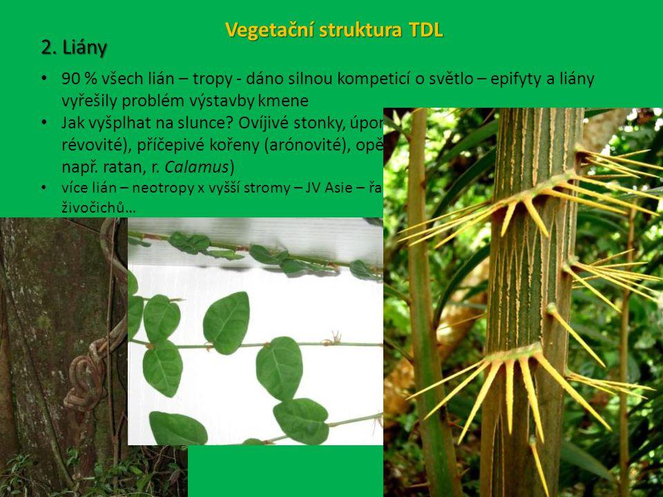 Vegetační struktura TDL