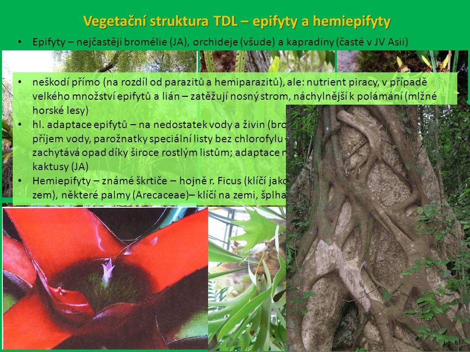 Vegetační struktura TDL – epifyty a hemiepifyty