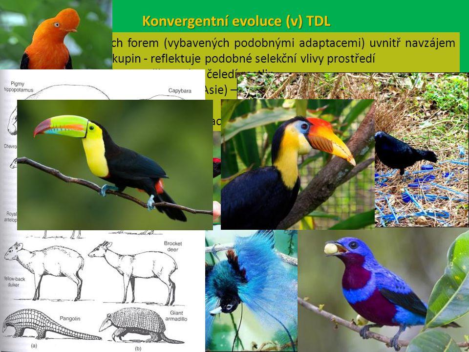 Konvergentní evoluce (v) TDL