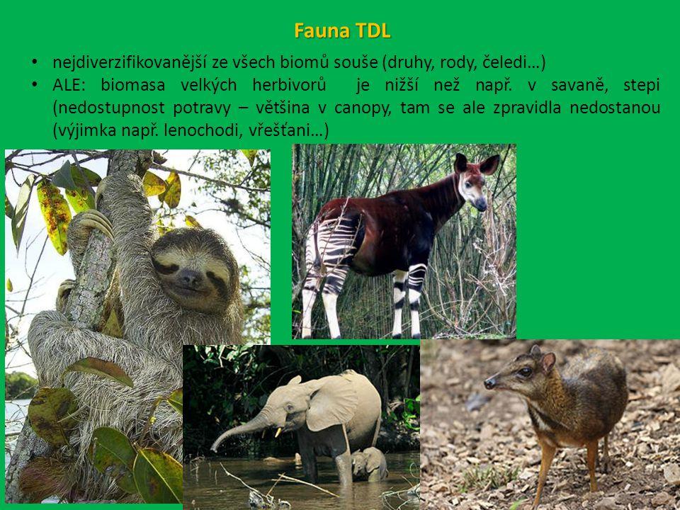 Fauna TDL nejdiverzifikovanější ze všech biomů souše (druhy, rody, čeledi…)