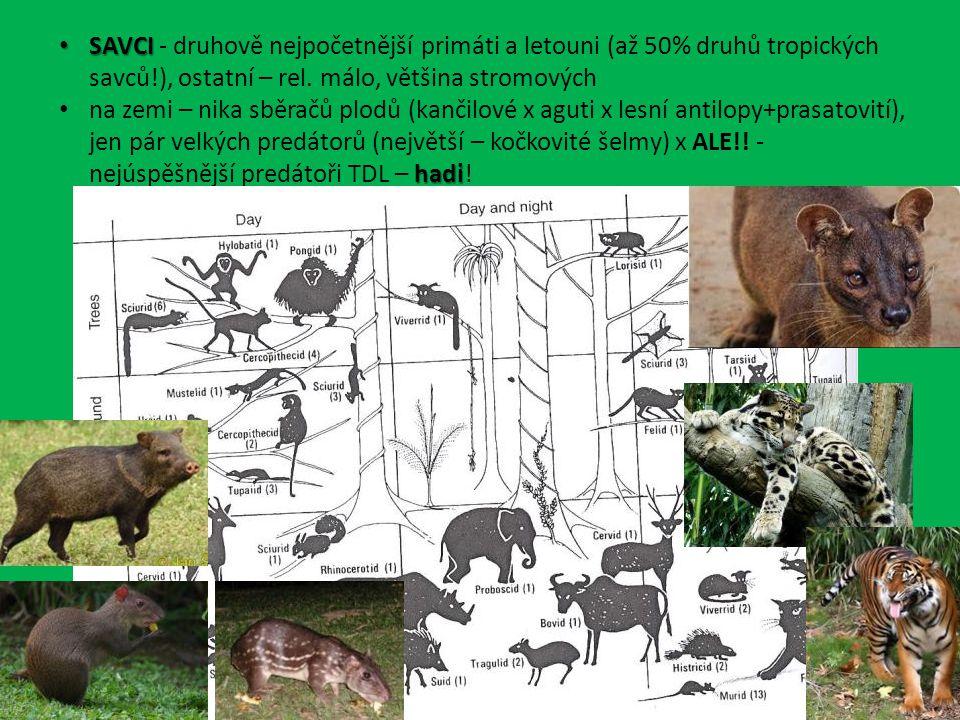 SAVCI - druhově nejpočetnější primáti a letouni (až 50% druhů tropických savců!), ostatní – rel. málo, většina stromových