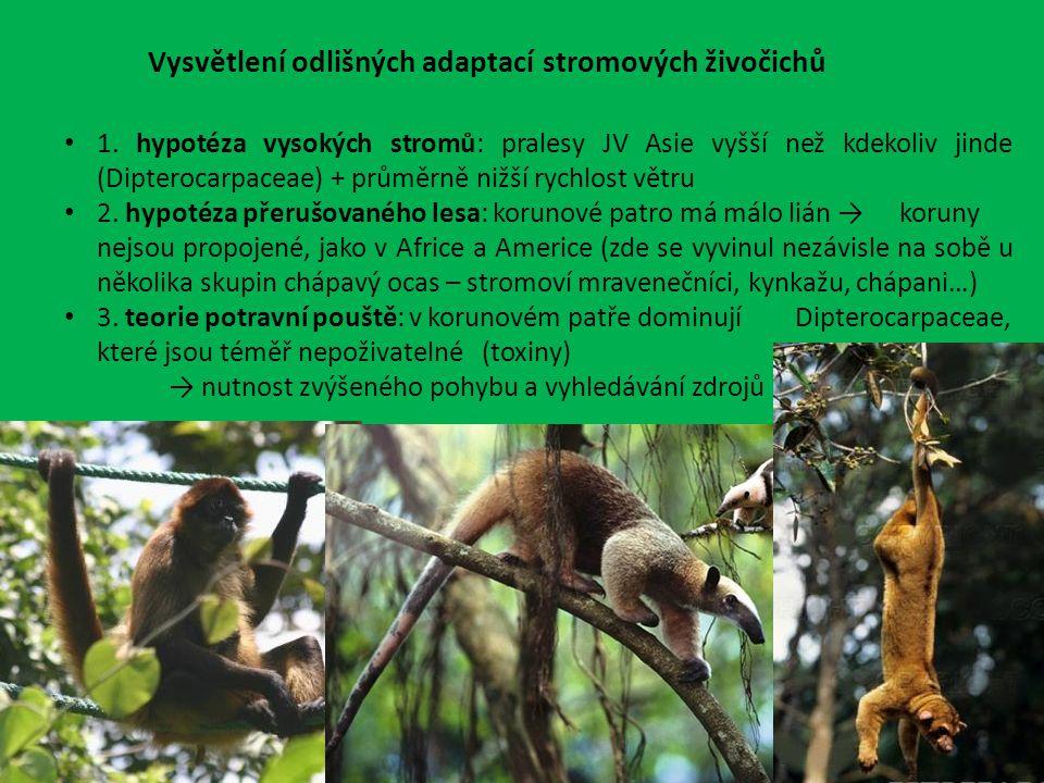 Vysvětlení odlišných adaptací stromových živočichů