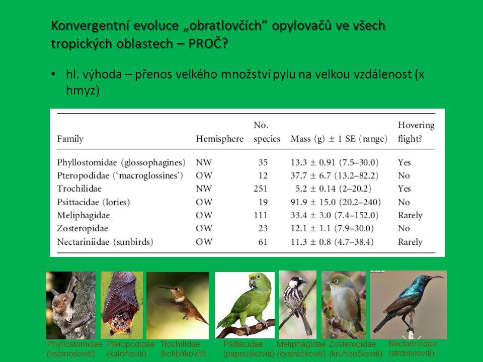 """Konvergentní evoluce """"obratlovčích opylovačů ve všech tropických oblastech – PROČ"""