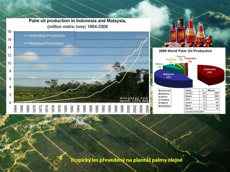 Tropický les převedený na plantáž palmy olejné