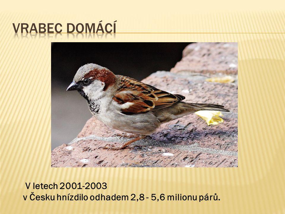 Vrabec Domácí V letech 2001-2003