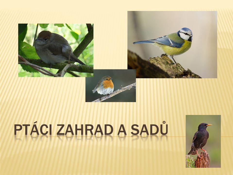Ptáci zahrad a sadů