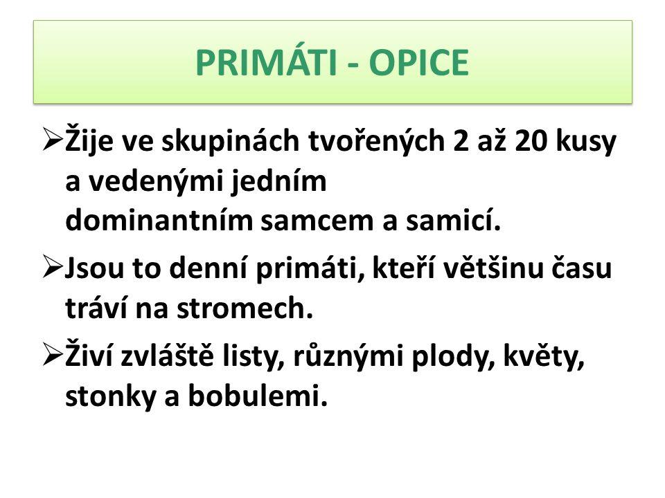 PRIMÁTI - OPICE Žije ve skupinách tvořených 2 až 20 kusy a vedenými jedním dominantním samcem a samicí.