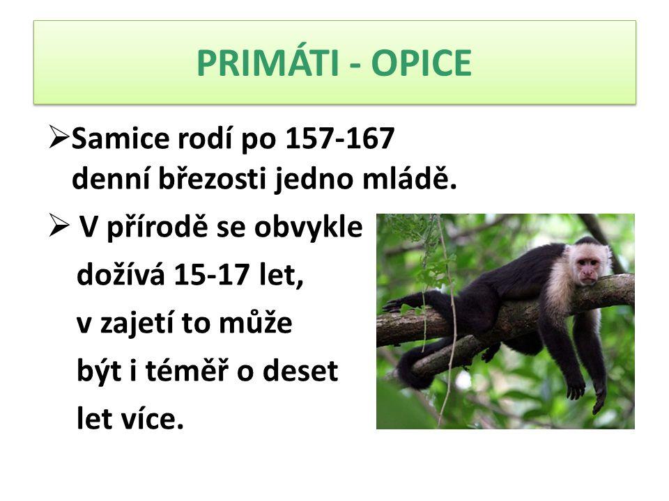 PRIMÁTI - OPICE Samice rodí po 157-167 denní březosti jedno mládě.