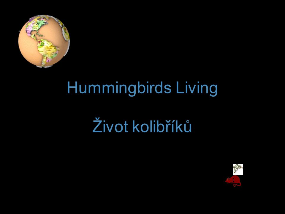 Hummingbirds Living Život kolibříků