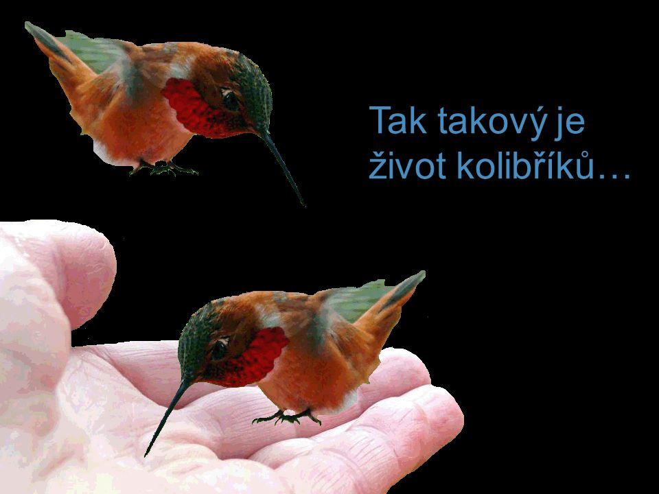 Tak takový je život kolibříků…