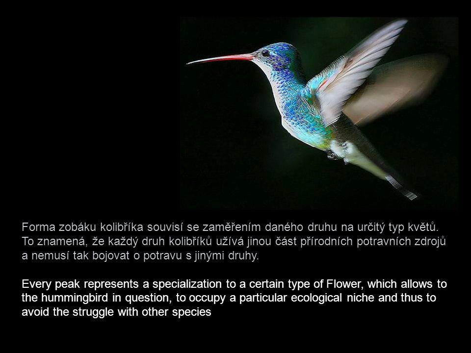 Forma zobáku kolibříka souvisí se zaměřením daného druhu na určitý typ květů. To znamená, že každý druh kolibříků užívá jinou část přírodních potravních zdrojů a nemusí tak bojovat o potravu s jinými druhy.