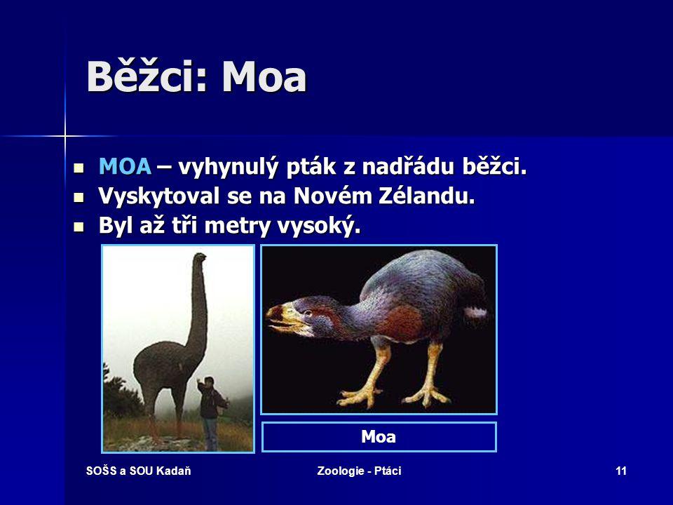 Běžci: Moa MOA – vyhynulý pták z nadřádu běžci.