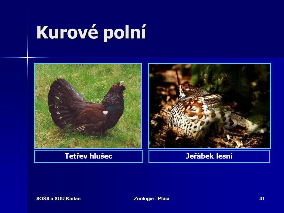 Kurové polní Tetřev hlušec Jeřábek lesní SOŠS a SOU Kadaň