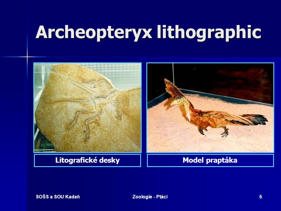 Archeopteryx lithographic