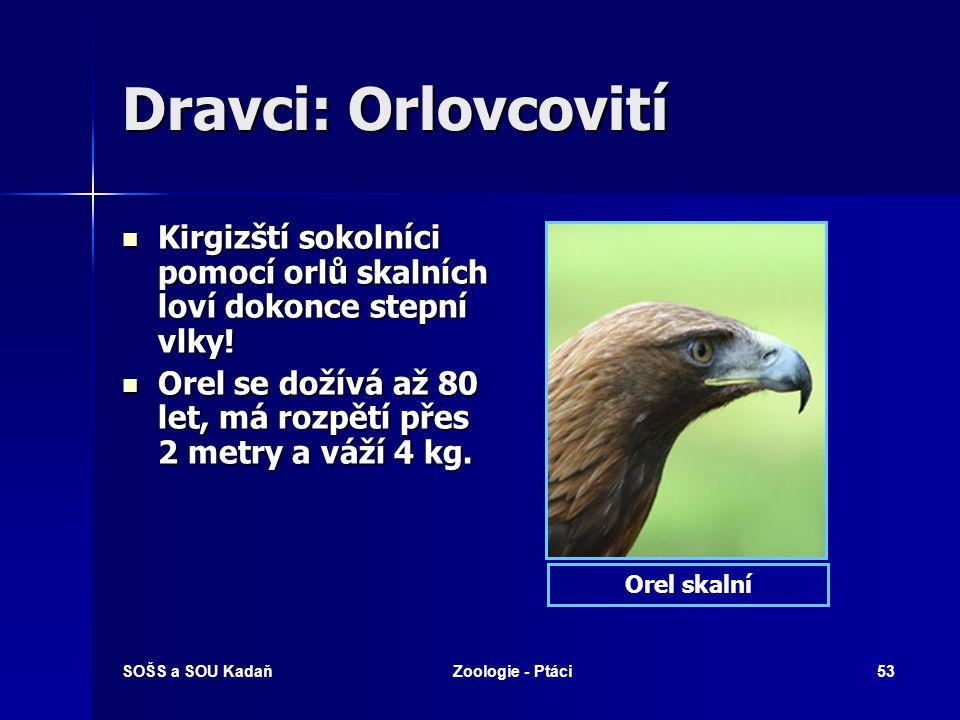 Dravci: Orlovcovití Kirgizští sokolníci pomocí orlů skalních loví dokonce stepní vlky!