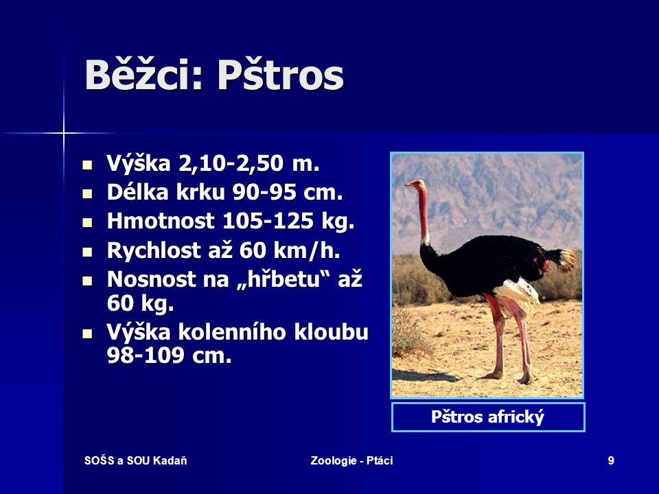 Běžci: Pštros Výška 2,10-2,50 m. Délka krku 90-95 cm.