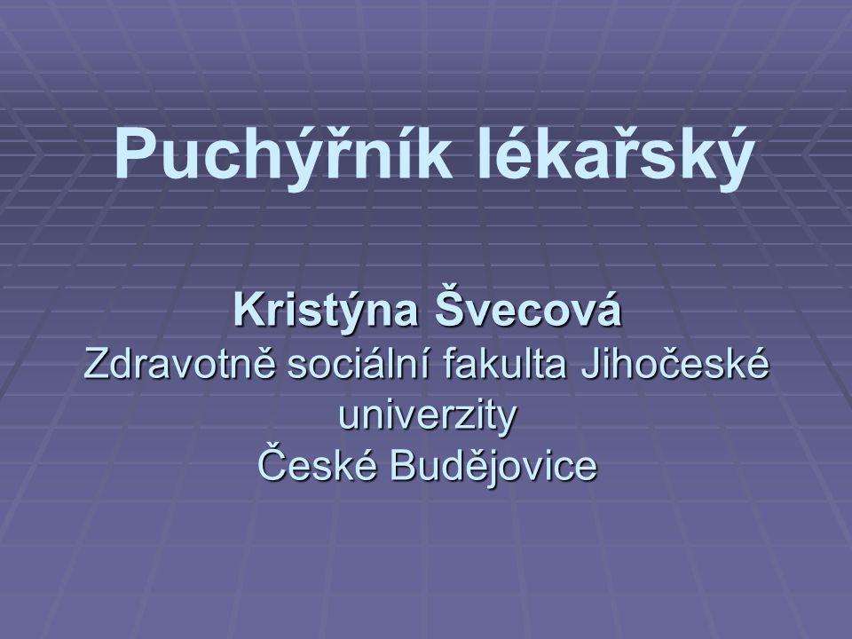Puchýřník lékařský Kristýna Švecová Zdravotně sociální fakulta Jihočeské univerzity České Budějovice
