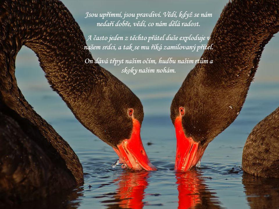 On dává třpyt našim očím, hudbu našim rtům a skoky našim nohám.