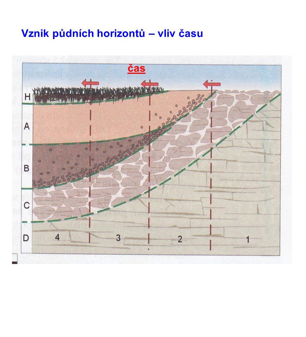 Vznik půdních horizontů – vliv času